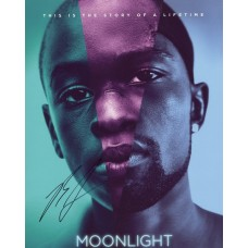 Barry Jenkins AUTOGRAPH Moonlight SIGNED IN PERSON 10x8 Photo